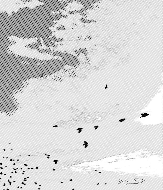 birdandlines